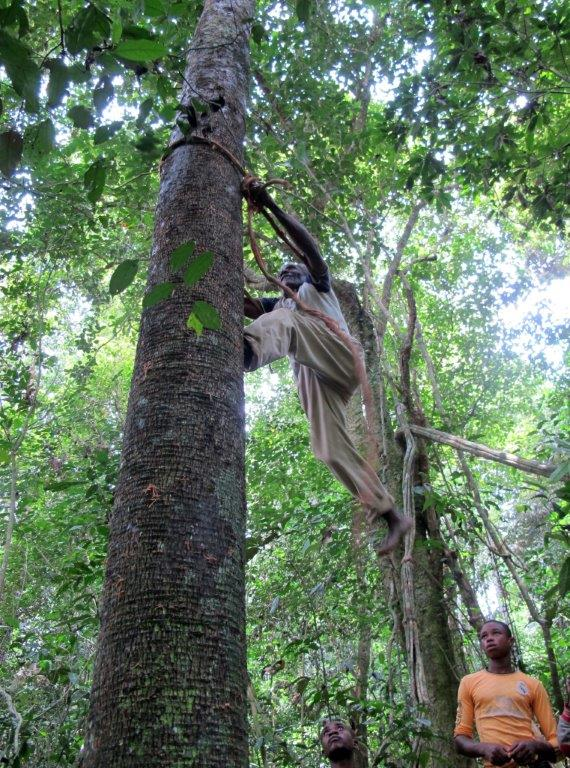 Bernard Wewela teaches how to climb a tree to fetch spinage(Photo Petterik Wiggers)